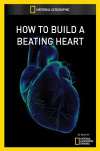 How to Build a Beating Heart