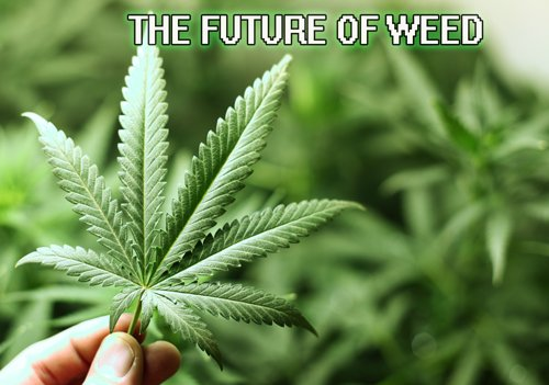 The Future of Weed