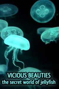 Vicious Beauties: The Secret World of Jellyfish