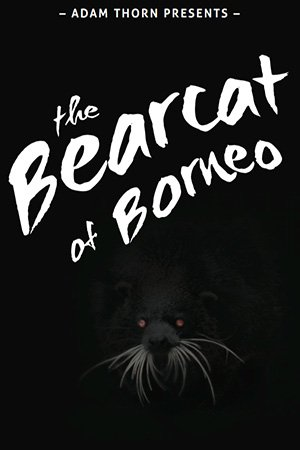 The Bearcat of Borneo