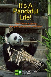It's a Pandaful Life!