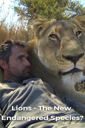 Lions: The New Endangered Species?